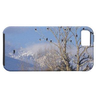 Treeful des aigles chauves s'approchent de étui iPhone 5