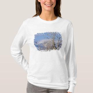 Treeful des aigles chauves s'approchent de t-shirt