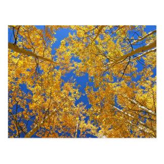 Trembles colorés du Colorado… Carte Postale