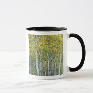 Trembles d'automne en passage de McClure dans le Mug