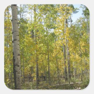Trembles en automne sticker carré