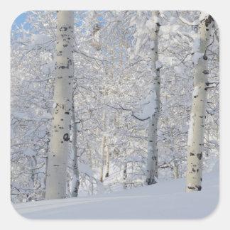 Trembles Neige-Couverts, Beartrap-Désolation Ridge Sticker Carré