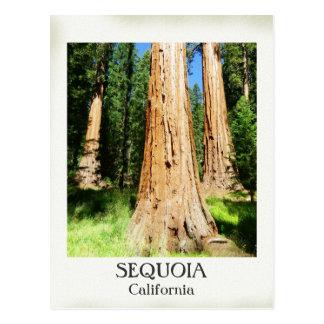 Très Nice carte postale de séquoia !