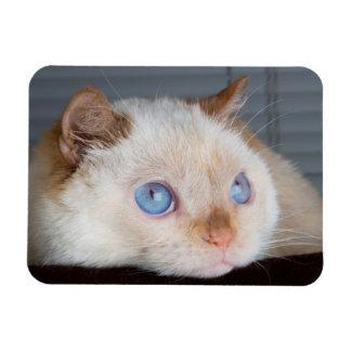 Trident l'aimant 06 de chat magnets rectangulaire