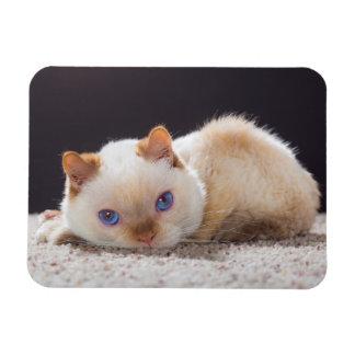 Trident l'aimant de chat magnet souple
