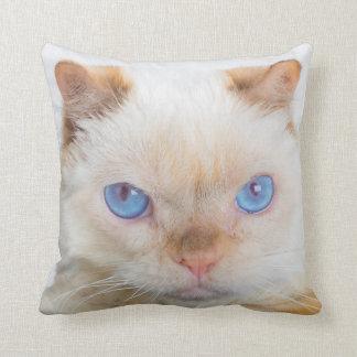 Trident le carreau de chat oreiller