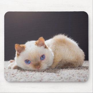Trident le tapis de souris 01 de chat