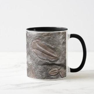 Trilobites fossile : Tasse de FOSSILES de