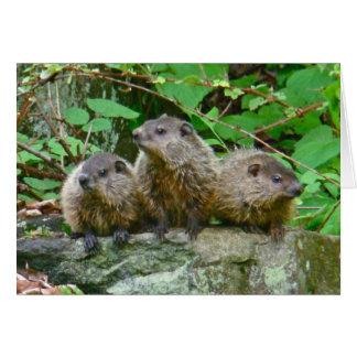 Trois bébé Groundhogs Carte De Vœux