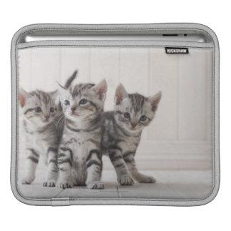 Trois chatons de Shorthair d'Américain Poches Pour iPad