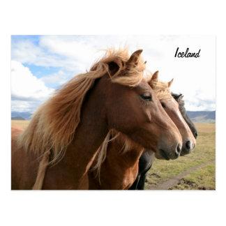 Trois chevaux dans une carte postale de rangée