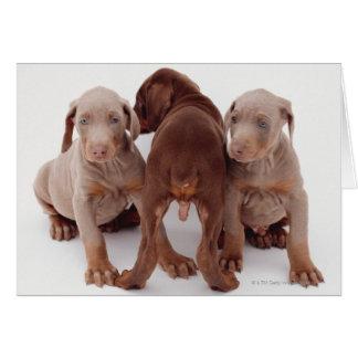Trois chiots de pinscher de dobermann carte de vœux