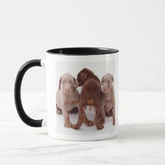 Trois chiots de pinscher de dobermann mug