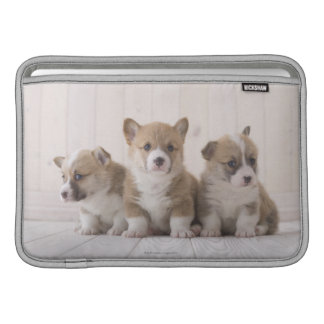 Trois corgis de Gallois Poche Macbook