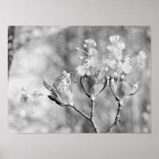 Trois fleurs à l'arbre poster