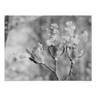Trois fleurs à l'arbre posters