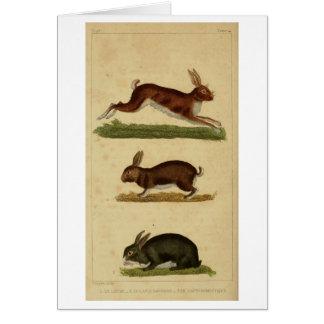 Trois lapins carte de vœux