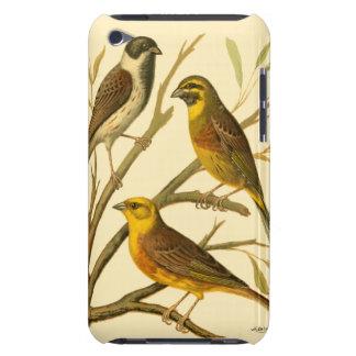 Trois oiseaux domestiques étés perché sur une coques iPod Case-Mate