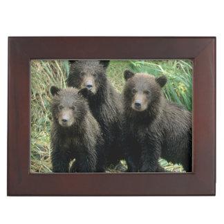 Trois ours gris CUB ou Coys (CUB de Boîtes À Souvenirs