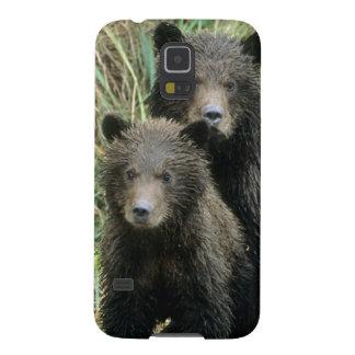 Trois ours gris CUB ou Coys (CUB de Coques Galaxy S5