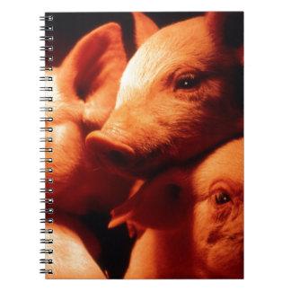 Trois petits porcs carnets à spirale