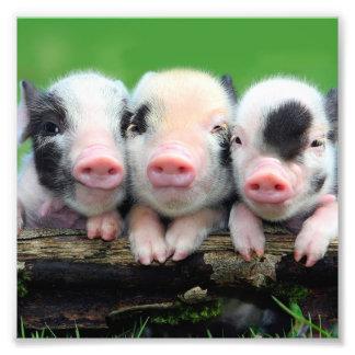 Trois petits porcs - porc mignon - trois porcs impression photo