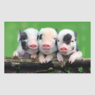Trois petits porcs - porc mignon - trois porcs sticker rectangulaire