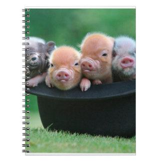 Trois petits porcs - trois porcs - casquette de carnet