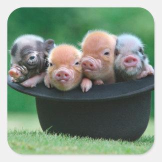 Trois petits porcs - trois porcs - casquette de sticker carré
