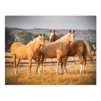 Trois poneys de palomino carte postale
