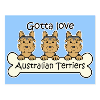 Trois terriers australiens carte postale