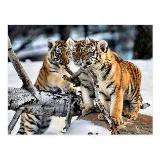 Trois tigre CUB en cadeaux d'art de neige Carte Postale