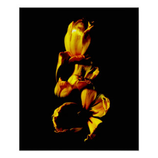 Trois tulipes brillantes d'or ont encadré la copie poster