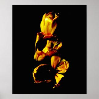 Trois tulipes brillantes d'or affiches