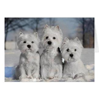 Trois Westies dans la neige Cartes