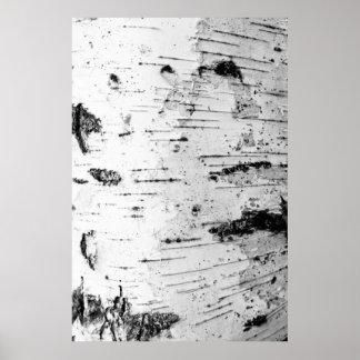 posters tronc de bouleau tronc de bouleau affiches art tronc de bouleau toiles tronc de bouleau. Black Bedroom Furniture Sets. Home Design Ideas