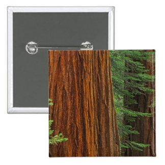 Troncs de séquoia géant dans la forêt, Yosemite Pin's