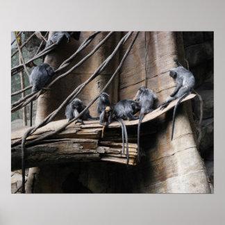 Troupe argentée de singe de Langur avec le bébé Posters