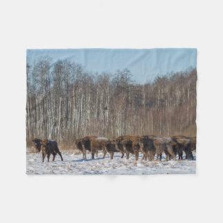 Troupeau de bison