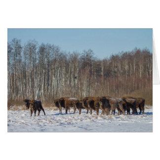 Troupeau de bison carte de vœux