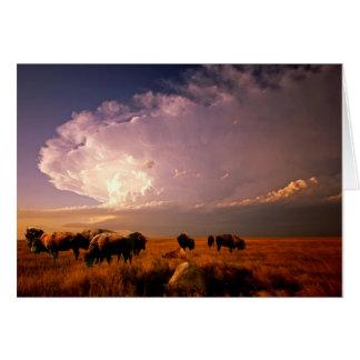 Troupeau de Buffalo Cartes