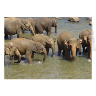 Troupeau de cartes de voeux d'éléphants