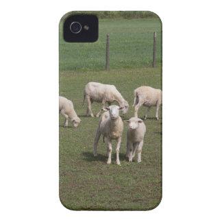 Troupeau de moutons coques iPhone 4 Case-Mate