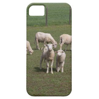 Troupeau de moutons coques iPhone 5