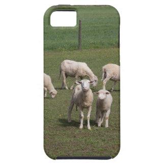 Troupeau de moutons étui iPhone 5