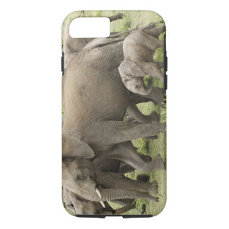 Troupeau d'éléphant africain, africana de coque iPhone 8/7