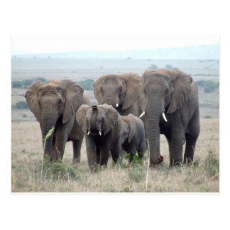 troupeau d'éléphant carte postale