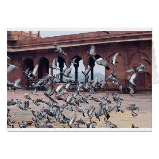 Troupeau des pigeons carte de vœux