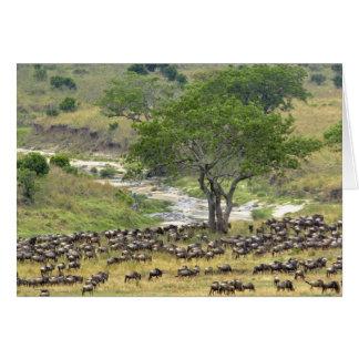 Troupeau massif de gnou pendant la migration, cartes