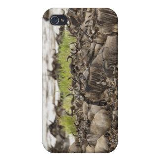 Troupeau massif de gnou pendant la migration, coque iPhone 4